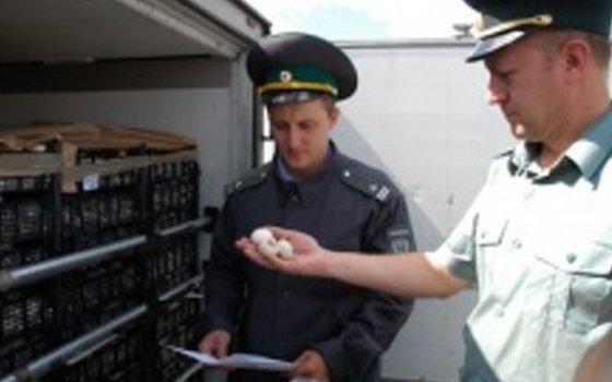 Пограничники пресекли ввоз 50 тонн винограда ишампиньонов из Республики Беларусь