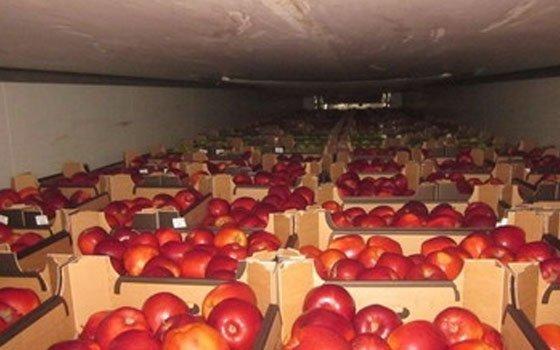 Смоленская таможня непропустила 120 тонн санкционных фруктов