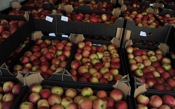 Смоленские пограничники задержали сорок тонн польских яблок награнице с республикой Беларусь