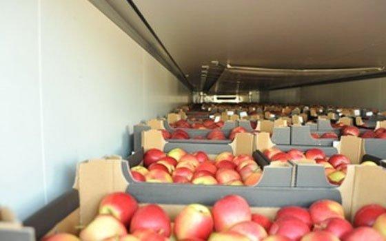 Смоленские пограничники задержали шесть фур ссанкционными яблоками игрушами