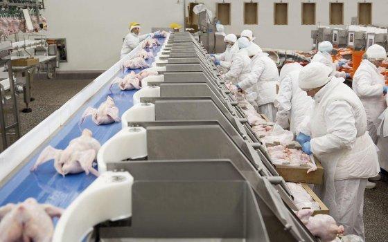«Мираторг» произвёл более 114 тыс. тонн высококачественного мяса птицы в 2018 году
