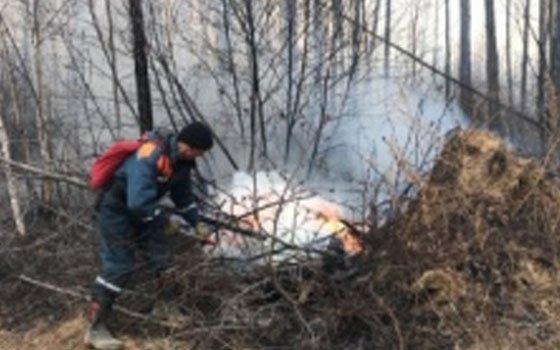 В Гагаринском районе горел лес