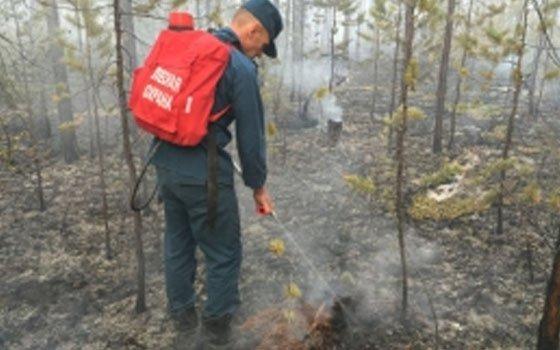 В Ершичском районе случился лесной пожар