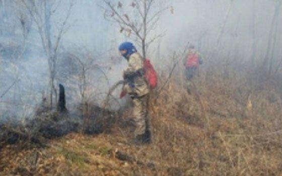 В Ершичском и Велижском районах произошли лесные пожары