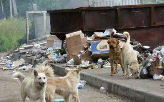 Промышленный район Смоленска «оккупировали» собаки