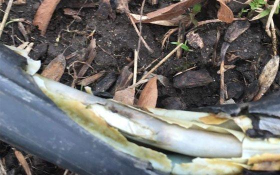 Жителей Вязьмы переполошил оголенный кабель в парке