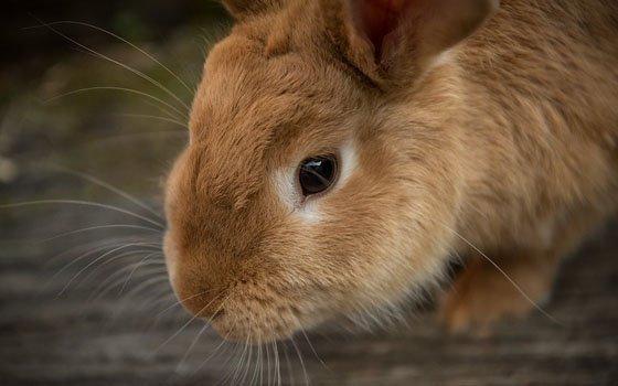 Смоленская кролиководческая ферма увеличит мощности