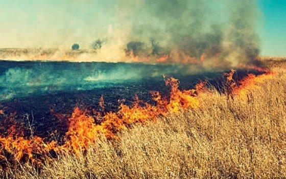 Смоленскую область охватили «травяные» пожары