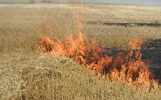 Количество «травяных пожаров» в Смоленской области стремительно растет