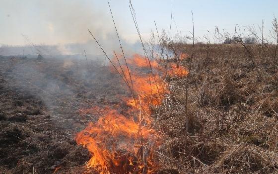 Пал травы продолжается на территории Смоленской области