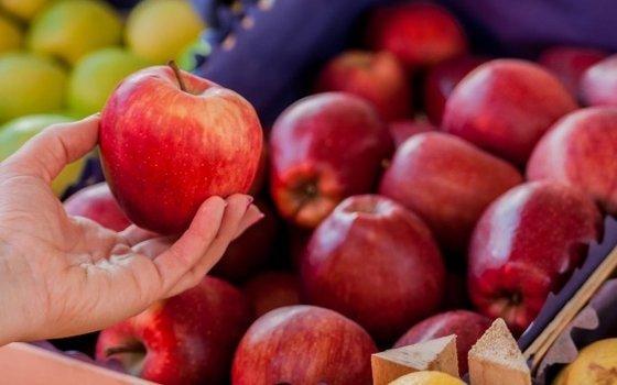 Смоленские таможенники не пропустили в страну грузовики с яблоками